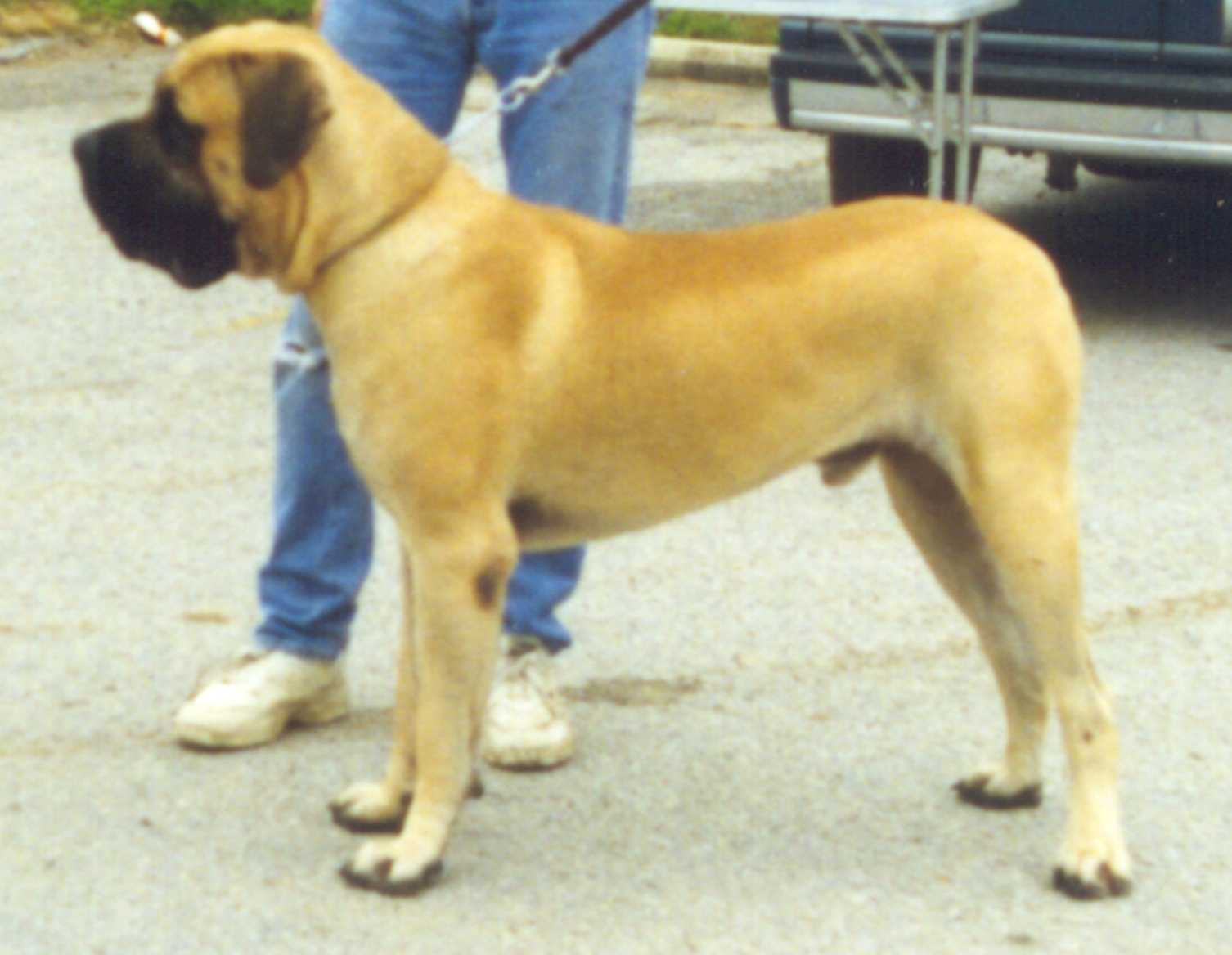Article about color genetics of this breed, with detailed information about the effects of eumelanin
